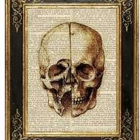 Study of Skull by Da Vinci Medical Illustration