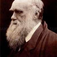 Charles Darwin Poster Print
