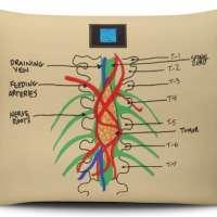 Grey's Anatomy Cushion