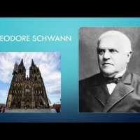 Theodor Schwann and Schwann Cells