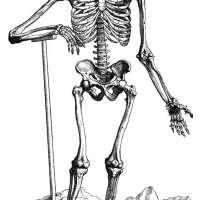 Vesalius Skeletal System Poster Print