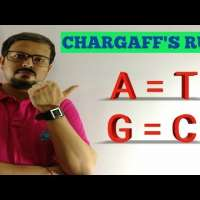 CHARGAFF'S RULE - Erwin Chargaff