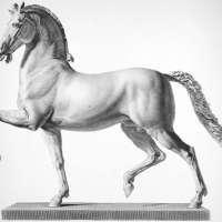 Horse Model Steel Engraving