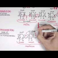 Biochemistry of Carbohydrates