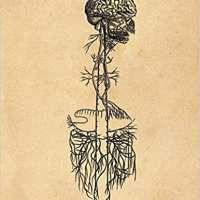 Andreas Vesalius Anatomy Notebook